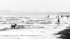 Acecho / Desplante (Ignacio M. Jiménez) Tags: playa beach ignaciomjiménez perro dog gente people mar arena sea sand bw byn blackandwhite blancoynegro puntaumbria huelva andalucia andalusia españa spain timespectra wow