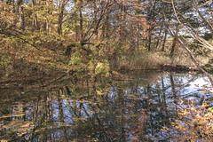 DSC_0189 (juor2) Tags: d750 nikon scene travel japan fukushima aizuwakamatsu lake pond maple autumn scenery volcano colorful