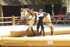 2018.06.21.061 HARAS du PIN - Voltige traditionnelle de cirque (alainmichot93 (Bonjour à tous - Hello everyone)) Tags: 2018 france frankreich francia frankrijk frança γαλλία франция normandie orne pinauharas harasdupin haras animal mammifère équidé cheval horse pferd caballo cavallo cavalo paard άλογο лошадь voltige
