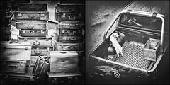 Les valises sont faites..... (Des.Nam) Tags: noiretblanc noirblanc noir nb nordpasdecalais nord bw blackwhite monochrome mono desnam valise chien voiture ville street streetphotographie hautsdefrance dyptique