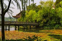 HANGZHOU (RLuna (Charo de la Torre)) Tags: parque china asia hangzhou lago lake landscape agua photo canon rluna rluna1982 naturaleza nature bridge viaje vacaciones exótico