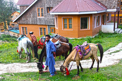 IMG_5792 Images for kashmir live style (Shahina Haque) Tags: kashmir live style canon eos 700d landscape grass sky mountain animal mountainside