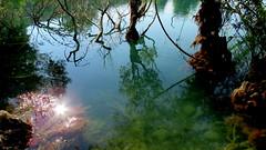 Lac du Broc (bernard.bonifassi) Tags: bb088 06 alpesmaritimes 2018 juillet eu canonsx60 eau lac lacdubroc valléeduvar reflet arbre