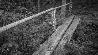 walking bridge, wooden, forest, Saint George, Maine, Panasonic Lumix FZ200, 8.10.18