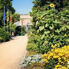 Summer 2018 @ Botanical garden Leuven (Kristel Van Loock) Tags: zomerindekruidtuin summer2018 zomer2018 kruidtuin kruidtuinleuven botanicalgarden botanischetuin botanischergarten ortobotanico jardinbotanique jardinbotaniquedelouvain jardimbotanico jardinbotanico louvain lovanio lovaina löwen visitleuven seemyleuven atleuven leveninleuven drieduizend leuvencity leuvensekruidtuin hortusbotanicuslovaniensis vlaanderen vlaamsbrabant visitflanders visitflemishbrabant visitbelgium flanders fiandre flandre flemishbrabant belgium belgique belgien belgië belgica belgio brabantflamand brabantefiammingo giardinobotanico zomer summer toerismevlaanderen toerismevlaamsbrabant toerismeleuven stadleuven