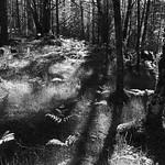 Black Woods of Rannoch 10 thumbnail