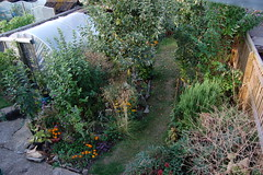 Looking Down on the Back Garden - August 2018 (basswulf) Tags: d40 1855mmf3556g lenstagged unmodified 32 image:ratio=32 permissions:licence=c 20180815 201808 3008x2000 lookingdownonthebackgarden garden backgarden polytunnel