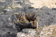 Stump (tommyajohansson) Tags: faved southendonsea england unitedkingdom gb estuary thamesestuary leighonsea tommyajohansson geotagged