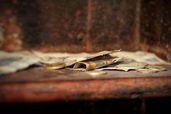 old tresor (A.K. 90) Tags: makro money geld tresor rust rost schein münzen brown braun abandoned old alt urban urbex sonyalpha6000 e18135mmf3556oss bulgarien