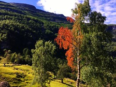 Geiranger, Norway (traceplaces) Tags: geiranger norway northerneurope fjord traceplaces nature scenery green red orange norwegian scandinavia yellow hill europe geirangerfjord