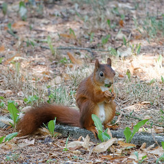 Bon appetite (wolfgang.kynast) Tags: friedhof cemetery eichhörnchen squirrel