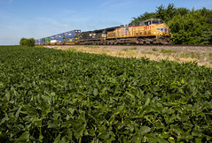 UP 5877 - Tuscola, Illinois (backlitkid) Tags: trains train freight intermodal beans illinois flat up5877
