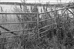 Locked Monochrome (brianarchie65) Tags: swanland spires church ducks water pond quarry gate lapollution canoneos600d geotagged brianarchie65 blackandwhite blackandwhitephotos blackandwhitephoto blackandwhitephotography blackwhite123 blackwhiterealms flickrunofficial flickr flickrcentral flickrinternational flickruk ukflickr yorkshirecameraramblers unlimitedphotos ngc eastyorkshire eastridingofyorkshire monochrome