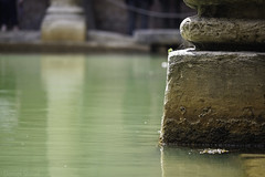 Bath (Norse_Ninja) Tags: bath england travel traveller roman panasonic gh5 journeyjd17