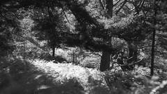 Black Woods of Rannoch 8 (ShinyPhotoScotland) Tags: perthshire scotland landscape blackandwhite rannoch highlands nature trees birch pine fujixt20 hdr light dark contrast relax flora intimatelandscape caledonianforestremnant blackwoodsofrannoch ranncoh helios58mm