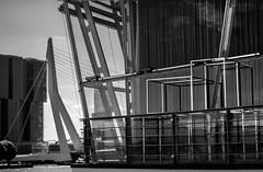 Erasmusbrug / De Boompjes Rotterdam (Kijkdan) Tags: architecture blackandwhite fujifilm monochrome erasmusbrug rotterdam architectuur city cityscape bridge