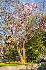 DSC_8727FL (davidben33) Tags: crownheights 2018 brooklyn newyork spring sky clouds trees leaves flowers architecture street building homes streetphotos people 718 women girl men landscape