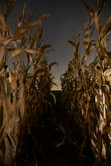 The Stars at Night....Texas (Matt4jPeg) Tags: corn night stars soil rows summer stalks