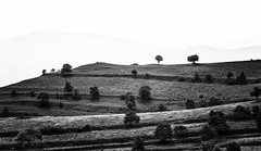 Rimetea (net.furion) Tags: black white romania tree sony ilce a7rii sel70200g