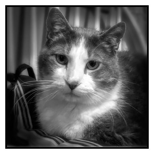 """cats choose us; we don't own them"" - Kristin Cast"