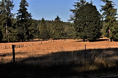 shadows on a field (wolf8_us) Tags: travels washingtonstate country olympia tumwater sunsets farms