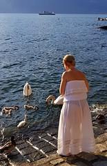 Signora con cigni (Aellevì) Tags: cigno mangiare trasparente bianco lago