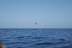 (fabhuleux) Tags: 1d canon boat dolphin france antilles martinique sub sea jump saut dauphin