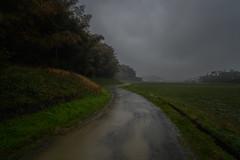 Heavy rain. (Yasuyuki Oomagari) Tags: rain road sunset evening dark field country countryside night light landscape nikon d850 zeiss distagont2821 japan fukuoka itoshima 日本 福岡 糸島 道 雨 夕景 風景写真