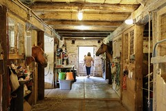 Aisle - 4 (Jenna Weller) Tags: barn horse horses bay chestnut person scene animal animals equine pet