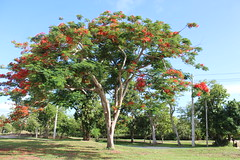 Árbol (ForeverAileen) Tags: árbol