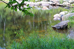 Chittenden, Vermont - 8/16/18 (myvreni) Tags: vermont summer nature outdoors pond