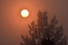 Ominous (James_D_Images) Tags: sun filtered dim wildfire forest fire smoke haze sunrise trees silhouette eerie orange dark britishcolumbia stateofemergency