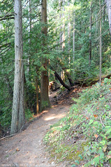 2018-08-18 Whistle Lake Trail 205 (26) (680x1024) (-jon) Tags: anacortes skagitcounty skagit fidalgoisland sanjuanislands washingtonstate washington pnw pacificnorthwest salishsea pugetsound acfl anacortescommunityforestlands whistlelake lake trail path 205 nikon nikonl22 tree douglasfir fern alder summer woods forest a266122photographyproduction