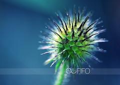 IMG_6594ad1web (sabine_in_singapore) Tags: flower munich plant macro makro creative art