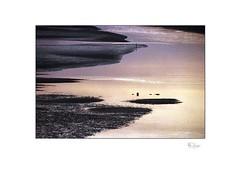 Dreaming of Tides (radspix) Tags: olympus om1n 300 mm zuiko t f45 fuji superia 800 pushed 1600 iso