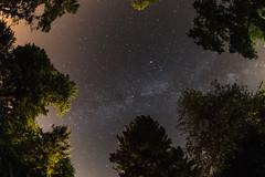 (Viktor Kiss) Tags: stars milkyway nikon d850 8mm fisheye samyang 35 night galaxy trees summer hungary