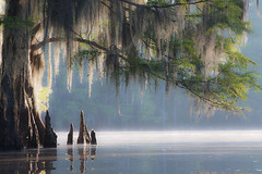 Caddo Lake (fredrcox@bellsouth.net) Tags: cypress bayou
