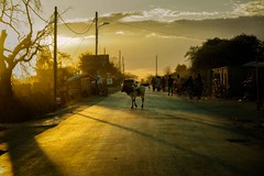 Some Town at Sundown (Rod Waddington) Tags: africa african afrique afrika madagascar malagasy sunset sundown town street streetphotography cattle steer buildings culture cultural ethnic ethnicity landscape