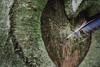 straight through the heart   l  2018 (weddelbrooklyn) Tags: natur baum bäume feder herz liebe nikon d5200 35mm holz botschaft nature tree trees wood feather heart love message