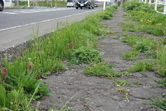 Hard to walk on this sidewalk (しまむー) Tags: sony cybershot dscrx100 carl zeiss variosonnar t 104371mm 28100mm f1849 菜の花 横浜町 yokohama town