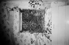 Secret cottage (esmeelily) Tags: 35mm film analog lomo lomography grain ilford black white is dead urbex derelict abandoned building olympus trip af 50