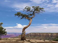 Resilience #2 - The Grand Canyon (Pete Foley) Tags: grandcanyon arizona roadtrip whyimovedtovegas