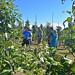 Riverwood Orchard-11