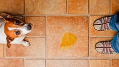 Como evitar que meu cachorro marque território dentro de casa?! (Meu.DOG) Tags: animais bemestaranimal cachorros cães cãoquemarcaterritério convivencia cuidadospet curiosidades dicaspet dog guiaderaças informação meudog pets petshop socializarcães urina veterinarios