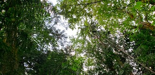 Looking up toward the Canopy