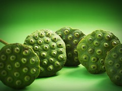 Lotus seeds green Stock Photo (www.icon0.com) Tags: lotus seed flower leaf pod indian closeup isolated produce aquatic natural agriculture tropical green dessert white river sweet herbal organic waterlily east lake asia medicine vegetable macro flora round up care group close plant ingredient seedpod fruit beautiful background fresh water nature detail lily food nut botany asian freshness