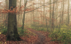 A walk in the mist (Netsrak) Tags: baum bäume eifel europa europe herbst landschaft natur nebel wald autumn fall fog landscape mist nature woods