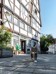 Soest-3h_sind_zu_kurz-5677 (clickraa) Tags: soest altsdtadt hansestadt fachwerk