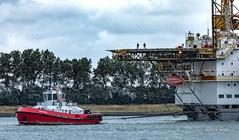 Beagle (Peet de Rouw) Tags: tugboat beagle kotugsmittowage damen damentug oilrig offshore transport sleepboot scheur peetderouw denachtdienst canon5dmarkiv canonef10040014556lisus