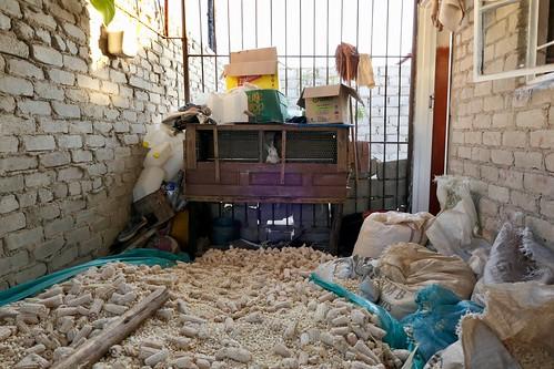 Chitungwiza rabbit hutch